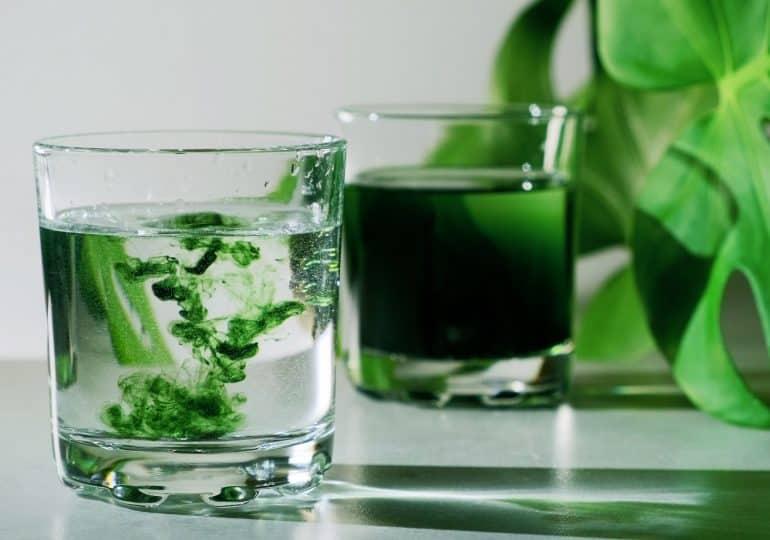 Chlorofil do picia - dlaczego aktualnie większość wplata go do swoich zdrowotnych rytuałów?