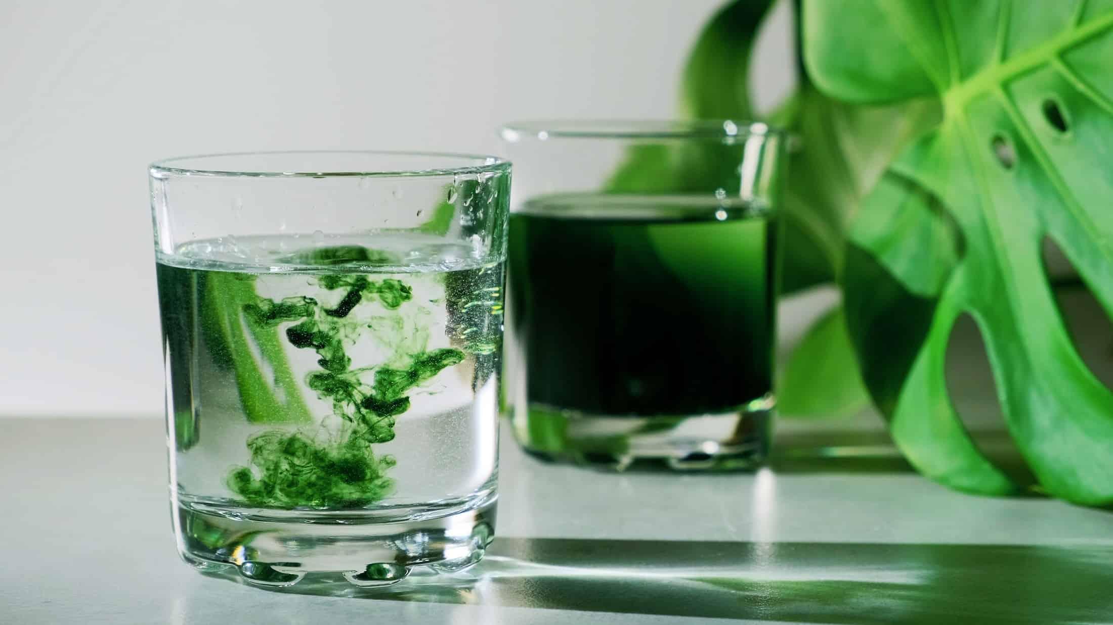 Chlorofil do picia – dlaczego aktualnie większość wplata go do swoich zdrowotnych rytuałów?